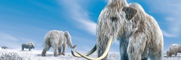 Discover the Ice Age