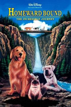 Kids Summer Movie Series