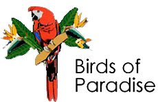 Bird's of Paradise Logo