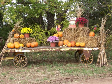 Down in the Hollar Pumpkin Pat