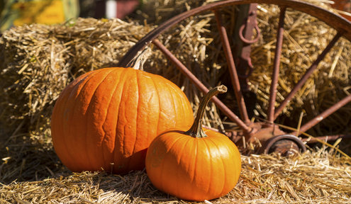2016 Wichita Pumpkin Patches and Corn Mazes