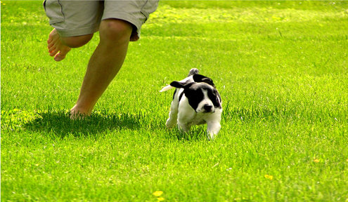 Wichita's Off-Leash Dog Parks