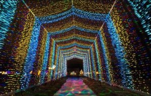 The Arc's Lights
