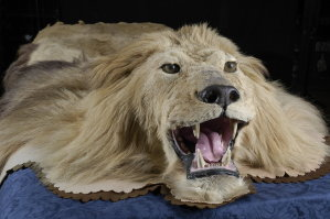 Skin of MGM Lion