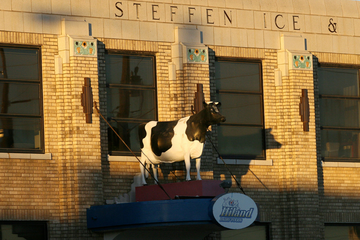 Hiland Dairy Cow