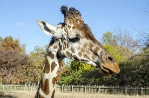 Sedgwick County Zoo