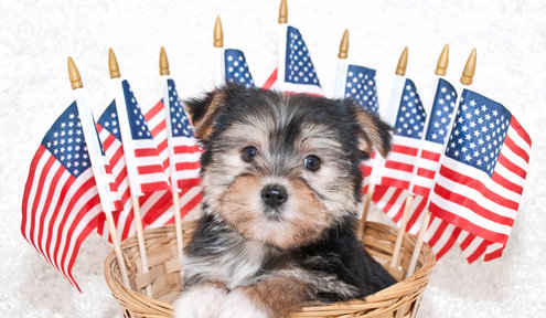 Safety Tips for Dogs on the Fourth of July