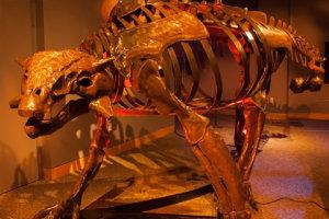 Sleep With the Dinos at Explor