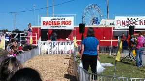 Watch a Pig Race