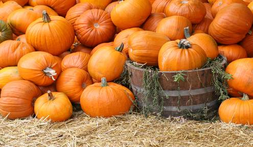 2017 Wichita Pumpkin Patches and Corn Mazes
