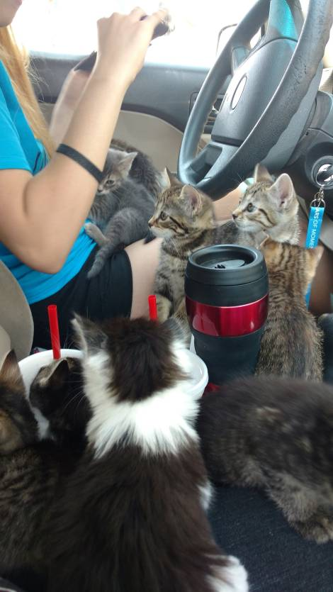 Saving Animals: One Ride At A Time