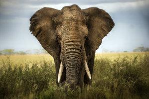 African Elephants Arrive In Wichita