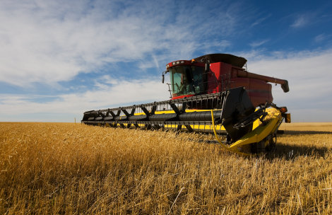 Kansas Winter Wheat Harvest to Increase by 10 Percent