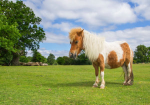 Four Ponies Rescued